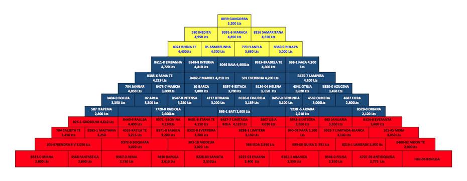 piramide de clasificacion